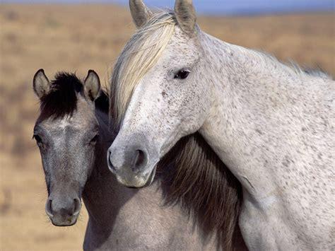 imagenes de feliz cumpleaños con caballos fonditos caballos salvajes animales caballos mascotas