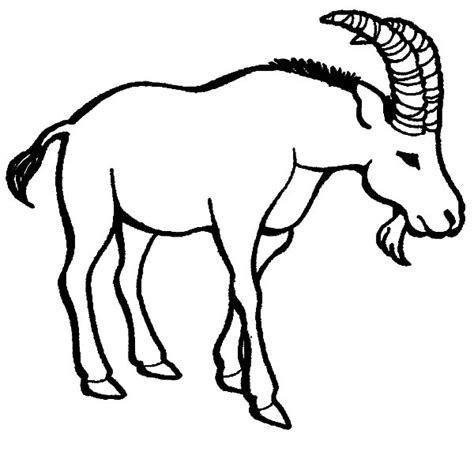 nanny goat coloring page baby animals coloring pages coloring pages baby goat
