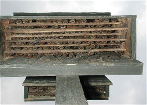 build a bat box icprb