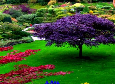 Description Of A Beautiful Garden Beautiful Gardens With Green Shrubs And Grass And Outdor