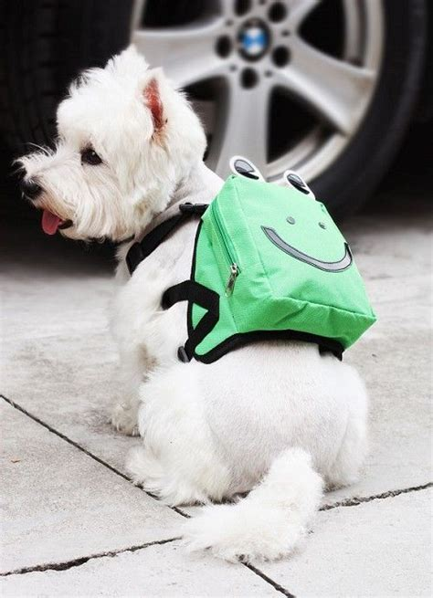 backpack for dogs 51 best images about adorable dogs in backpacks on hiking backpack