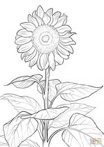 sunflower coloring page sunflower coloring page free printable coloring pages