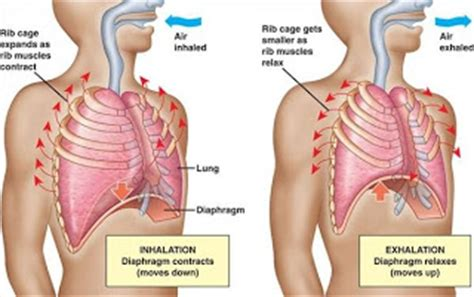healthy  fit breathing exercises improve lungs