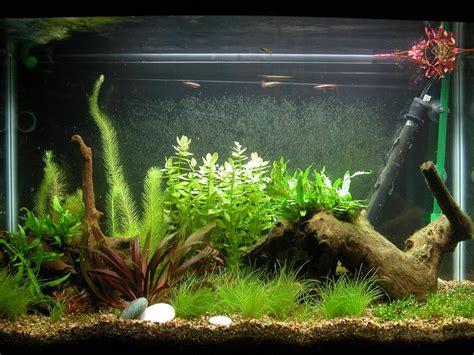 Decoration Of Aquarium by Aquarium Fish Tank Decorations Aquarium Design Ideas