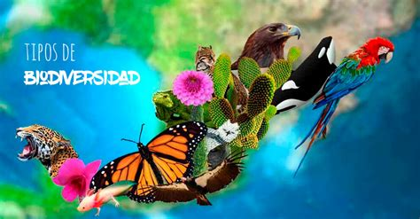 formacion medio ambiente gis biodiversidad formacion medio ambiente gis biodiversidad tipos de