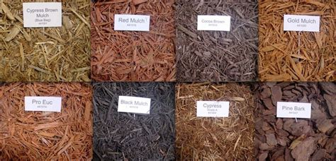 mulch keep it 1 from house next to house in termite resistant order melaleuca cypress