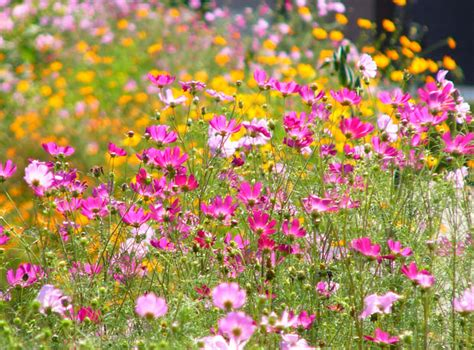 5 easy to grow flowers even you can t kill the garden glove
