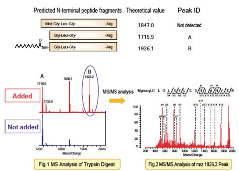 protein n terminal acetylation post translational modification analysis analysis of