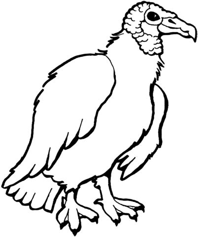 turkey vulture coloring page how to draw vulture coloring