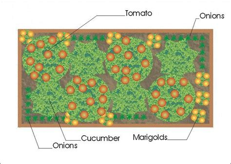 companion vegetable garden layout companion planting in raised bed gardening