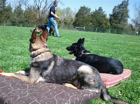 creature comforts inn creature comfort inn training
