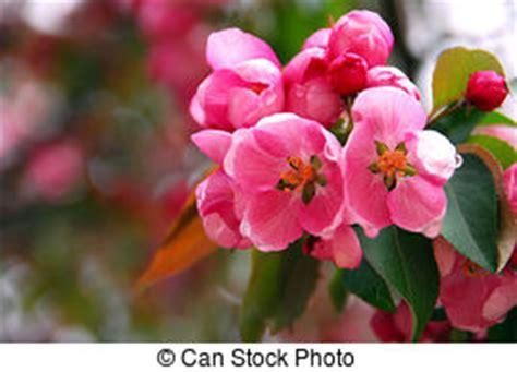 Orchideen Pflanzen Kaufen 785 by Bl 252 Tezeit Stock Foto Bilder 874 495 Bl 252 Tezeit Lizenzfreie