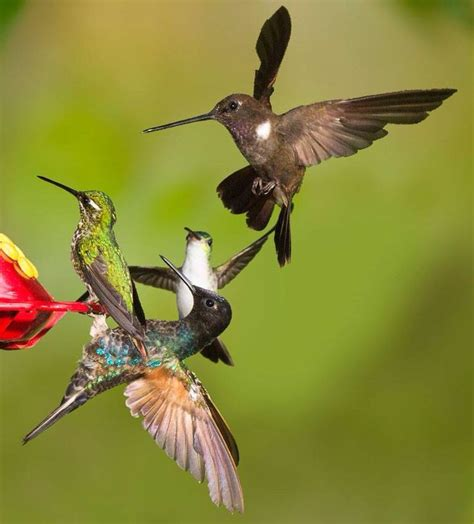 17 best images about hummingbirds only on pinterest baby