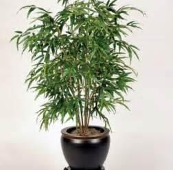 indoor plants no light bamboo l photo bamboo indoor plants