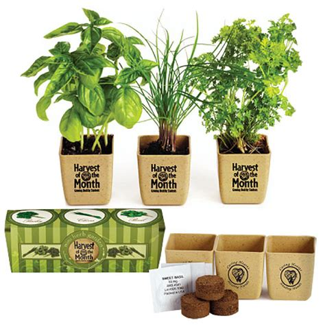 office herb garden promotional plants desk plants desktop promotional