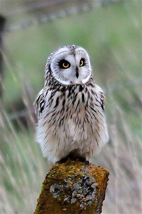 Owls Decor by Owl Love Picmia