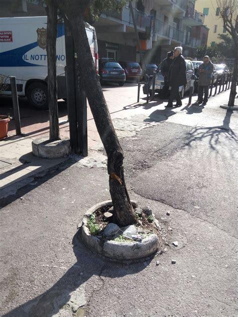 banco di napoli casoria via principe di piemonte la natura violata perch 232 rispettare ci 242 ci fa vivere