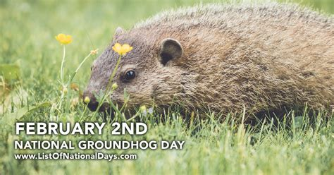 groundhog day zen buddhism groundhog day reference 28 images 17 best images about