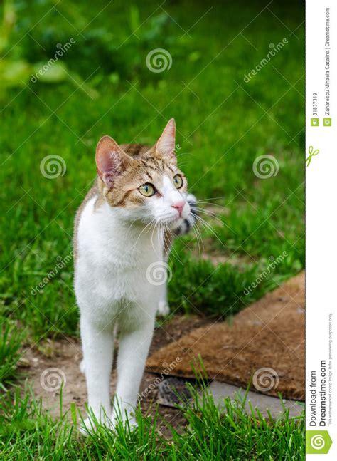 chat domestique dans le jardin images libres de droits image 31837319