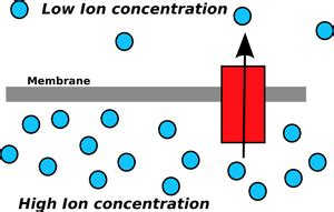 Generation Of Proton Gradients Across Membranes by Answers The Most Trusted Place For Answering S