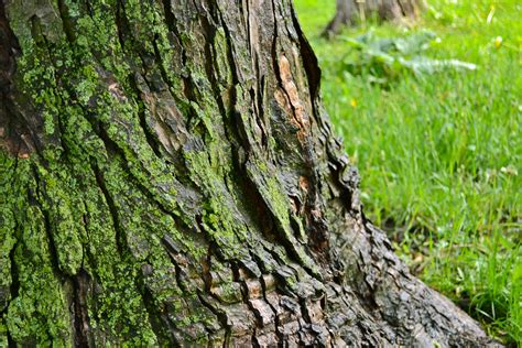 spotted tree trunk the re reinvention of myself
