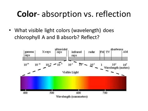 colors that reflect light photosynthesis defined process by which light energy is