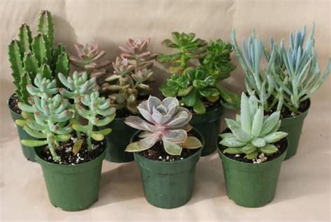 garden therapy hardy houseplants tribute journal