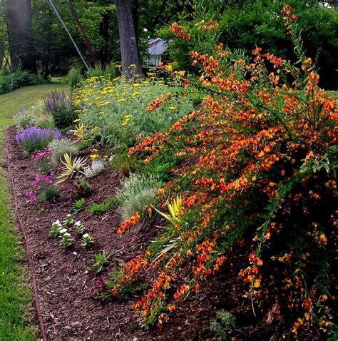 Garden Landscaping Ideas beautiful planting combination all things plants