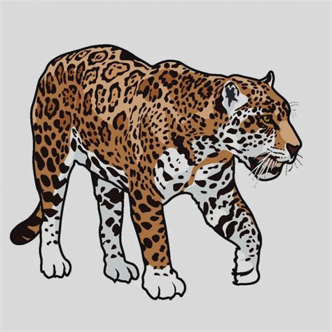 jaguar clipart pictures jaguar clipart best drawing sketch