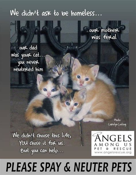 when can you neuter a 25 best animal rescue quotes on animal rescue