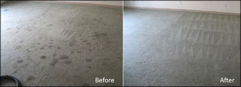 tinney rug cleaners steamin deamin carpet cleanin inc 34604 yp