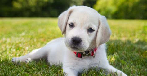 play with puppies for a day home boarding services in bury bolton and rossendale