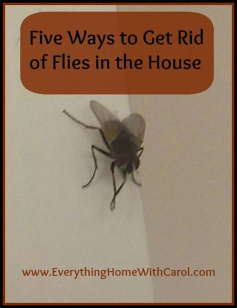 Get Rid Of House Flies by Five Ways To Get Rid Of Flies In The House Everything