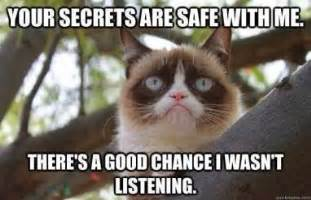 Cat on pinterest grumpy cat grumpy cat meme and grumpy cat quotes
