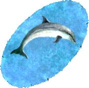 Dolphin Rug a dolphin rug uoguide the ultima encyclopedia