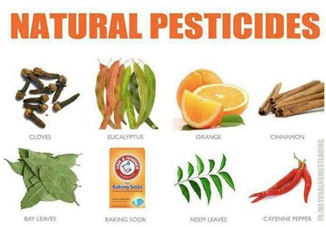Organic Pest Pesticides Garden Farm