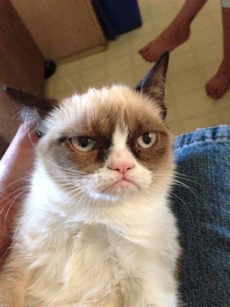 grumpy cat about grumpy cat 174