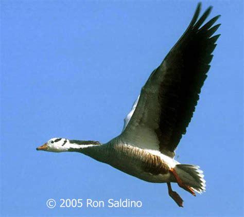 how high birds fly ii birdnote