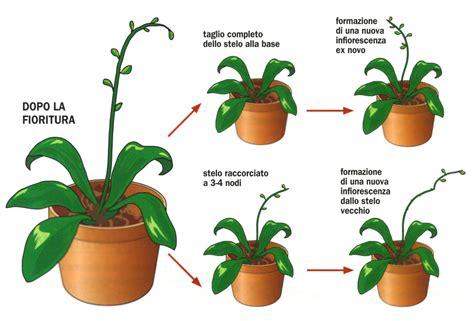 cura orchidee in vaso curare le orchidee sfiorite cose di casa
