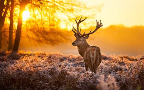 camo deer wallpapers  images