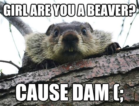 Beaver Meme - beaver memes quickmeme