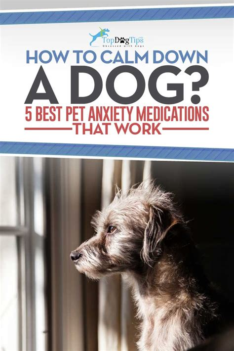 calming meds for dogs top 15 best anxiety medications for calming dogs in 2017