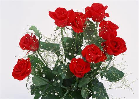 imagenes de rosas rojas animadas rosas rojas animadas auto design tech