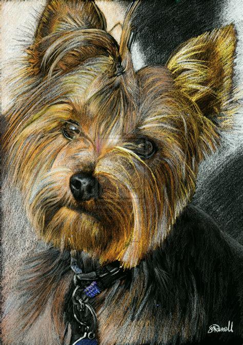 drawings of yorkies yorkie terrier drawing by srussellart on deviantart