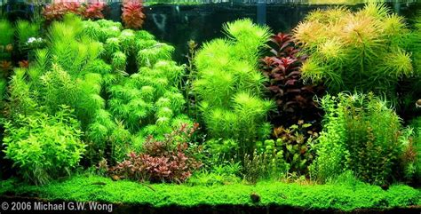 Aquascaping Tropical Fish Tank by 2006 Aga Aquascaping Contest 63