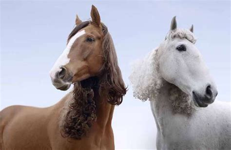 hairstyles for horses equestrian perms kempton park adds style with hair pieces