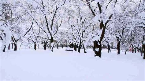 Daerah Salju salju datang lebih awal di kanto jepang tengah malam nanti gbi bethel