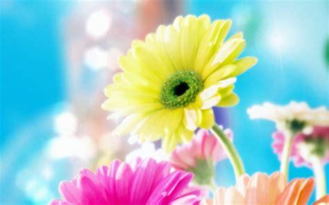 most beautiful flower bouquets hot girls wallpaper most beautiful flower wallpaper ever hot girls wallpaper