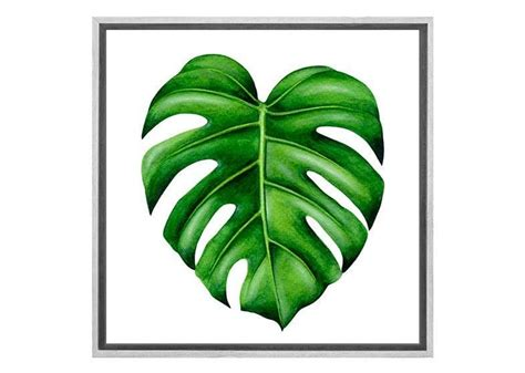 Monstera Leaf Wall buy monstera leaf canvas wall print australia