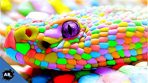 colorful colors colorful snakes snakebytestv ep 413
